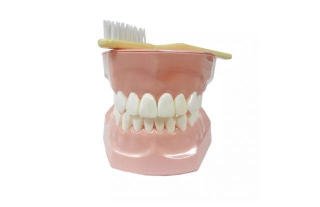 Модель демонстрационная ухода за зубами