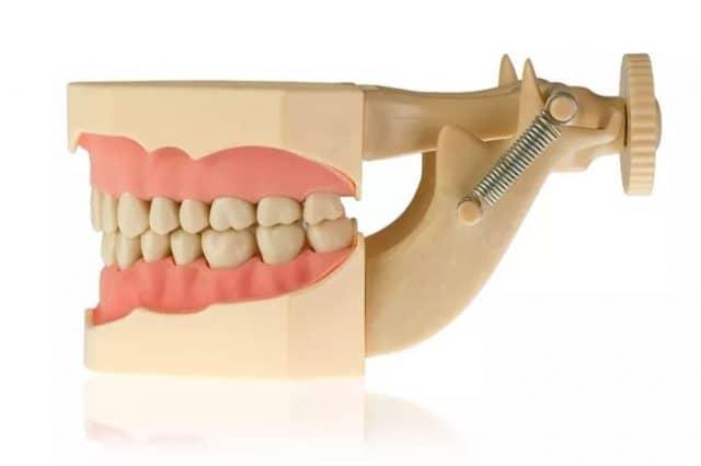 Модель тренировочная со съёмными зубами (нижняя и верхняя челюсть) HTS-A7-01 2
